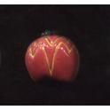 Fève à l'unité Pommes en forme n°5 / 1.0p3d10